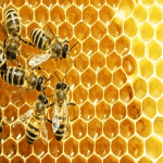 September is National Honey Month: Draw Attention with Custom Honey Labels
