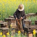 Enhance Honey Jars with High-Quality Custom Jar Labels
