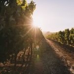 Wine Harvest Season is Approaching: Use Custom Wine Labels to Enhance Your Packaging